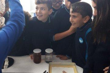 Bilim ve Mucitler Atölyesi Çalışıyor | İstanbul Pendik İlkokulu v...