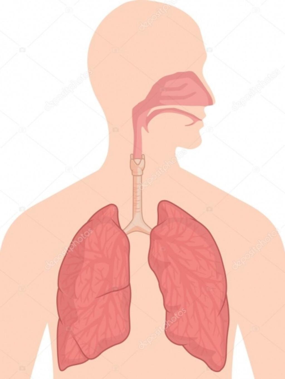 Solunum Sistemi Organları Drama Etkinliği | Pendik İlkokulu ve Or...