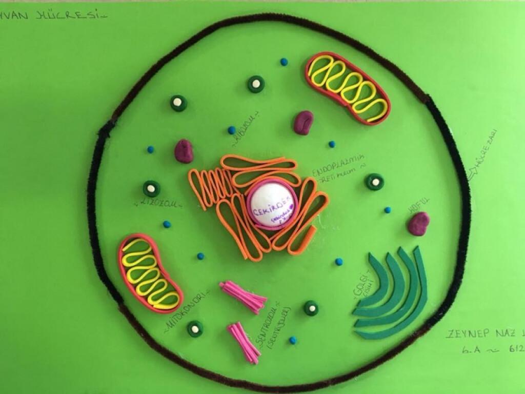 Fen Bilimleri Dersimizde Hücre Konusunu İşledik. | Kayseri Alpasl...