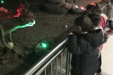 Sevimli Kuzular Dinozor Müzesinde